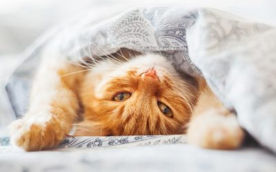 How To Stop Your Cat Peeing On Bed Covers and Pillows