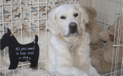 Coping with confinement – a guide to crate training